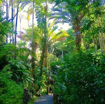 hawaii-tropical-botanical-gardens-walkwa