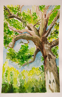 Water Color Tree Exploration