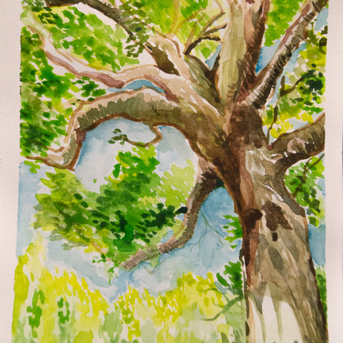 Water Color Tree 2