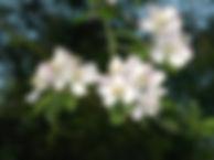 images-5.jpg