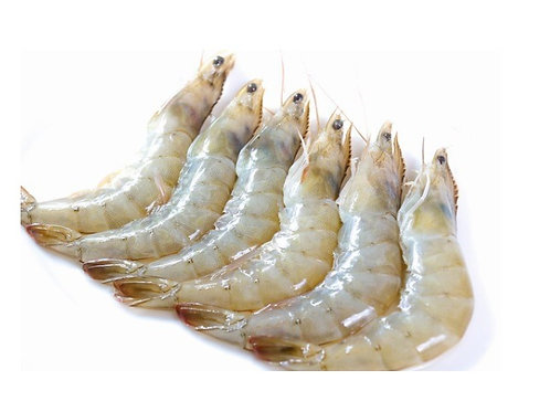 Shrimps Head On Shell On White Block 20/30 ( Medium ) 6 kg