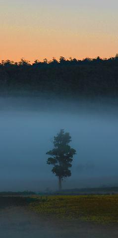 misty tree2.jpg