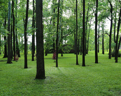 Black Iris Estate Wooded event space