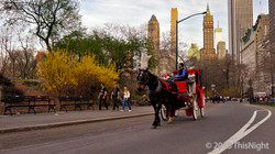 A horse-drawn carriage by the park