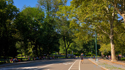 West Drive in Central Park