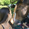 Equine reiki treatment