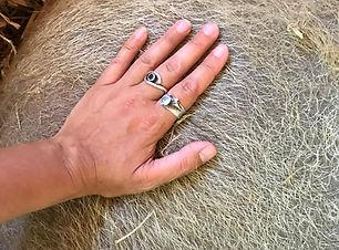 Animal Healing and Reiki Courses