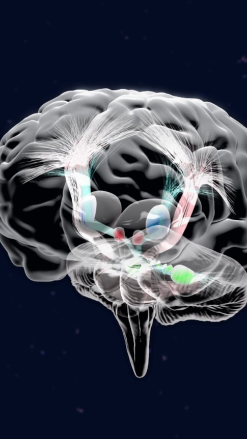 Cerebrocerebellar Pathway