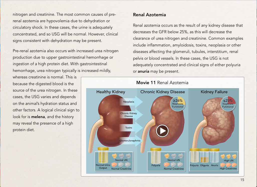 Clinical Pathology of the Urinary Tract