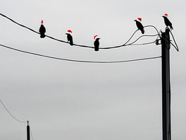 The Santa birds are watching!