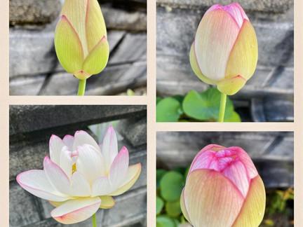 花開く意識