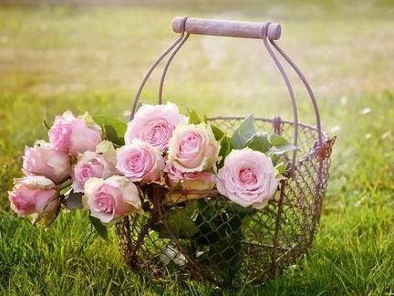 いつでも、どこでも、何度でも咲いてよい。咲き誇ってよい。