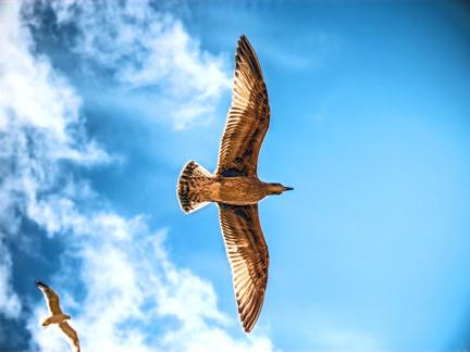 満足ゆくまで、羽は伸ばせているか