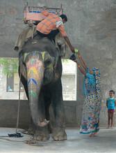 Hathigaon o Villa Elefante-Rajasthan, India