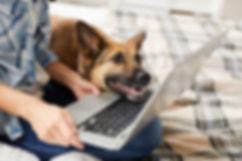 doglaptop.jpg