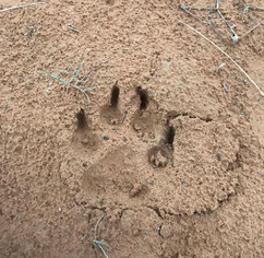 Leaving only Footprints.  Dogs are free to roam the entire plot (supervised by their owners), an ideal location for dogs to zoom around, explore, pee at trees, dig in the sand and gnerally behave as dogs were born to be.