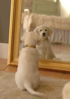 The mirror your dog sees!