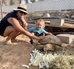 Tortoise Feeding