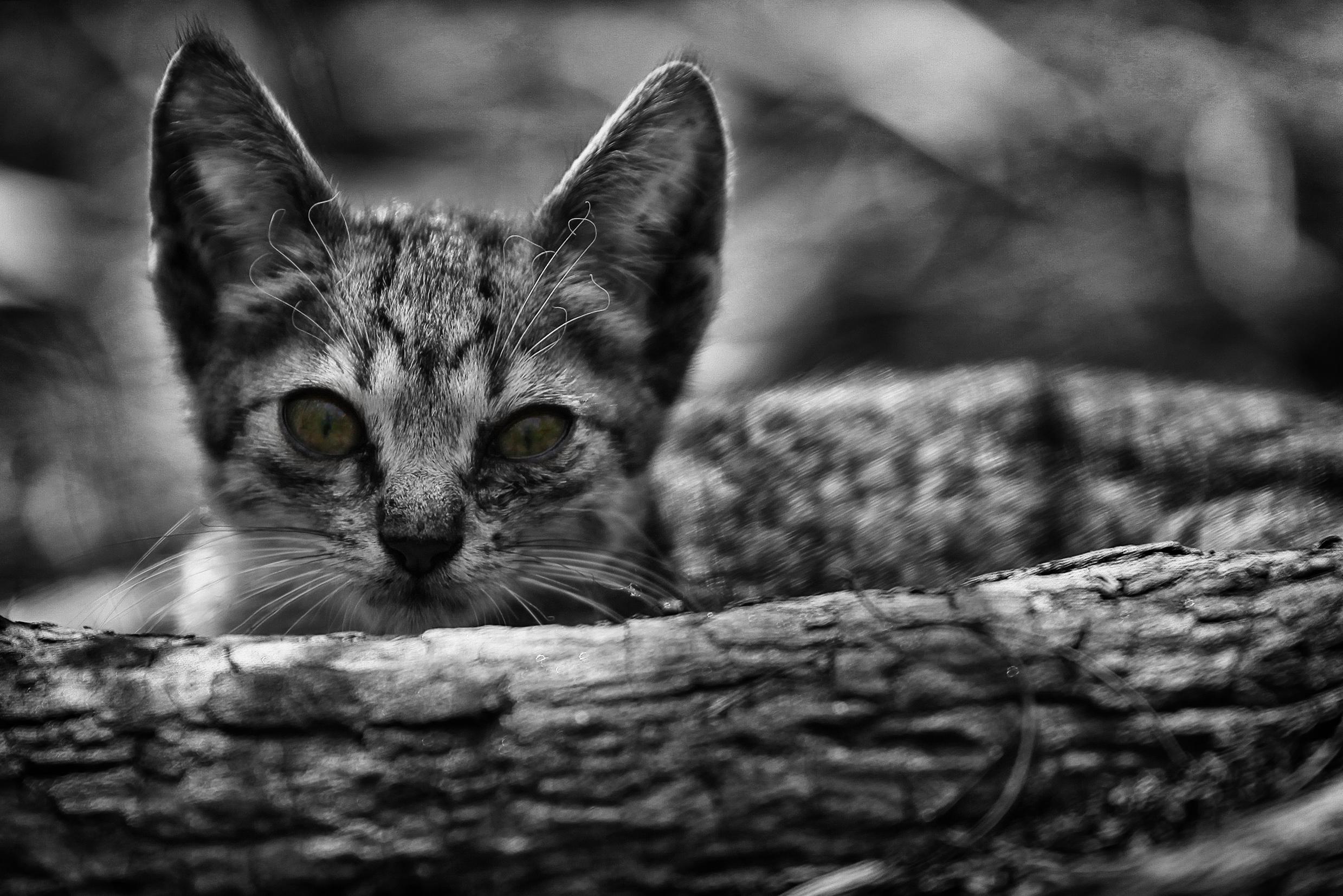 Foto: DENIS RIBEIRO