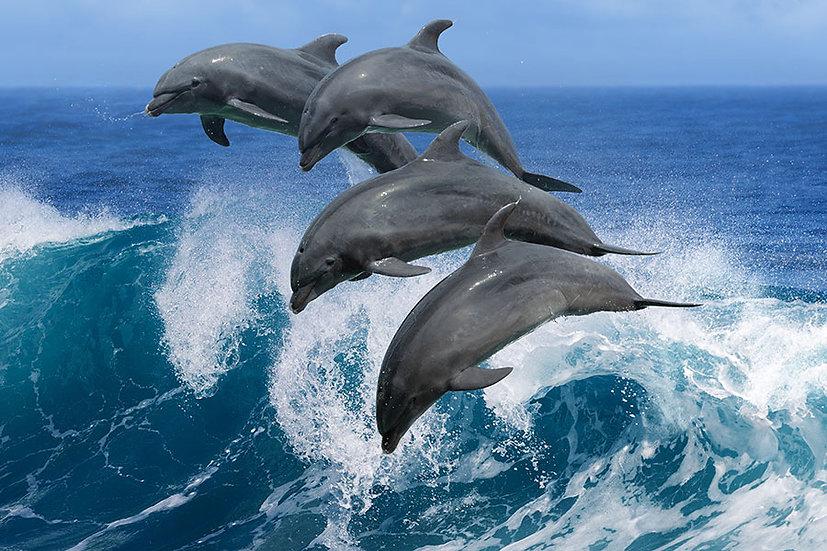 Hayvan Severler İçin Duvar Kağıtları   Üç Boyutlu Yunus Duvar Kağıtları