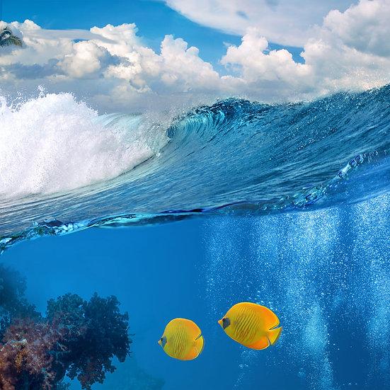 3 Boyutlu Sarı Balık Duvar Kağıdı | HD Okyanus Duvar Kağıdı | Ağrı