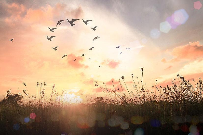 3 Boyutlu Kuşların Dansı Duvar Kağıdı | Duvar Kağıtları Balıkesir | Duvar34.com