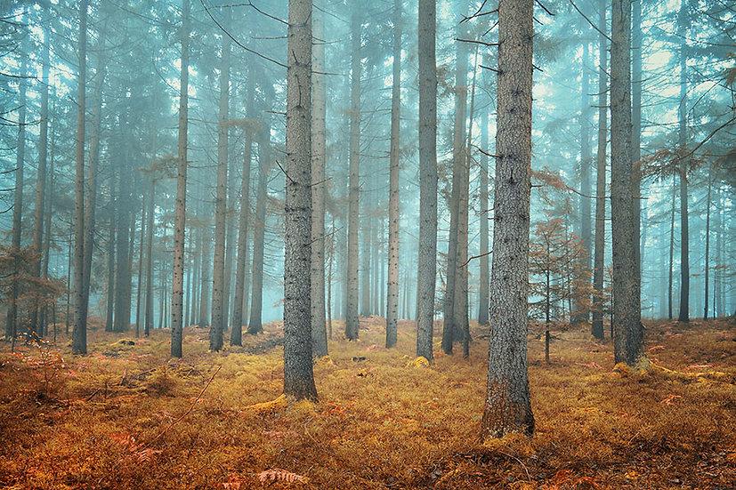 Ağaçlar Arasında Dağ Evleri Duvar Kağıtları   Orman Manzaralı Duvar Kağıtları 3D