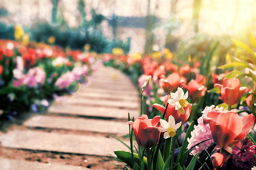 Eşsiz Taç Yaprakları Manzara Duvar Kağıdı | Çiçek Vadisi Duvar Kağıtları