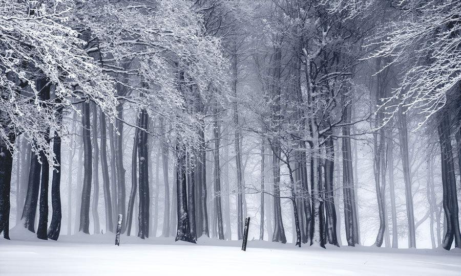 Kış Karlı Orman Manzara Duvar Kağıtları | 3D Bursa Poster Duvar Kağıdı