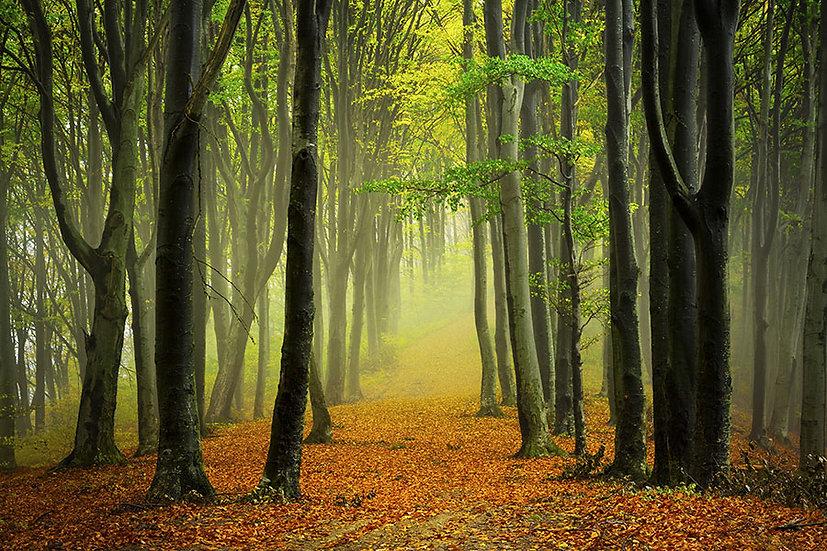 3 Boyutlu Yaşlı Orman Duvar Kağıtları | Orman Yolu Manzara Duvar Kağıtları