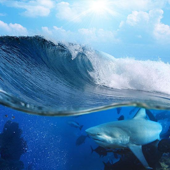 3 Boyutlu Köpek Balığı Duvar Kağıdı | HD Okyanus Duvar Kağıdı | Ağrı