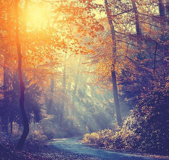 Sarı Orman Manzara Duvar Kağıtları | Güneş Işığı Manzara Duvar Kağıtları