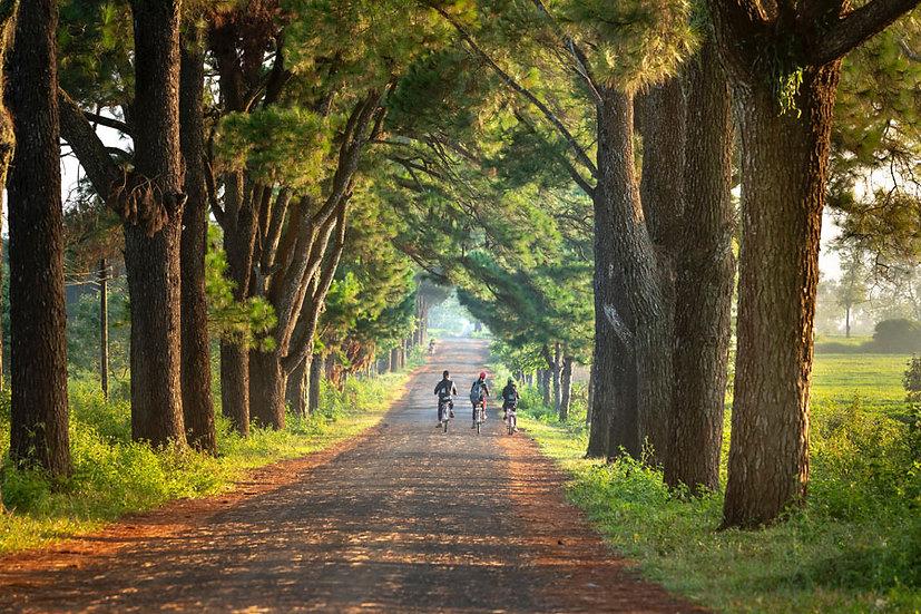 3 Boyutlu Çin Duvar Kağıtları | Ormanda Bisiklet Turu Duvar Kağıtları | Baku