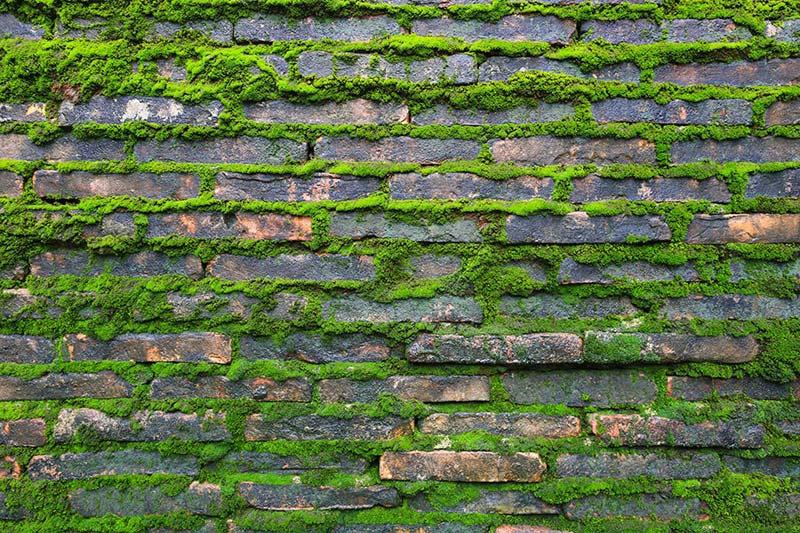3 Boyutlu Taş ve Tuğla Duvar Kağıtları | Yosunlu Taş Tuğla Duvar Kağıdı