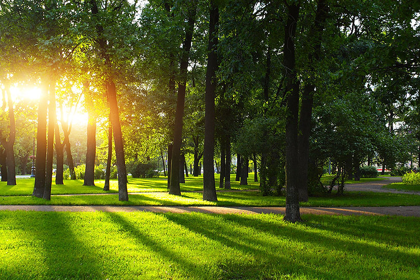 Manzara 3d Duvar Kağıtları | Orman Manzara Duvar Kağıtları | İskenderun