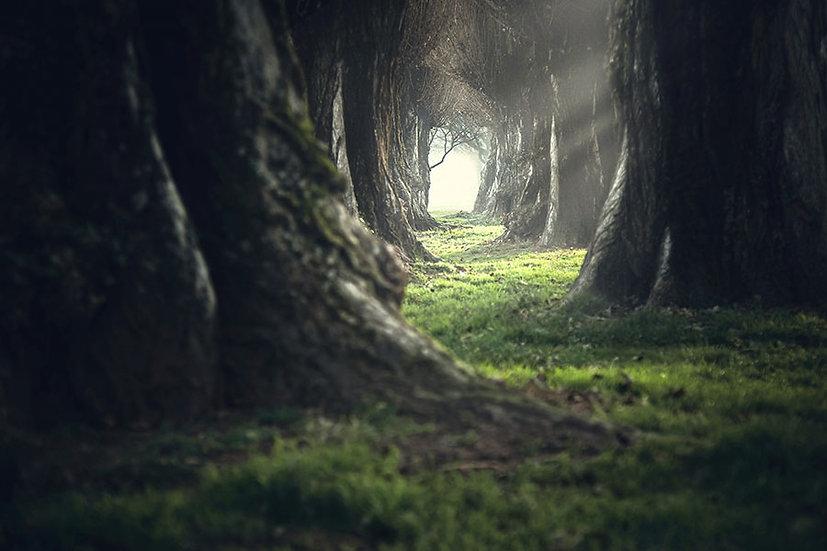 Ürpertici Mistik Kara Orman Duvar Kağıtları | 3D France Duvar Kağıtları