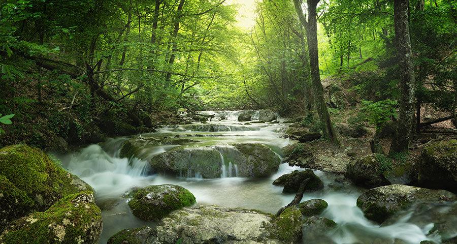 Eşsiz Orman Manzaralı Duvar Kağıtları   3D Taş Köprü Yolu Duvar Kağıtları