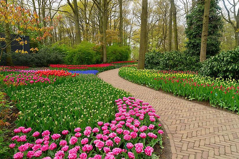 Çiçek Bahçesi Retro Duvar Kağıtları | 3D Hollanda Duvar Kağıtları
