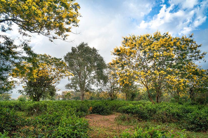 3 Boyutlu Duvar Kağıtları | Vahşi Doğa Ormanı Duvar Kağıtları | Madrid