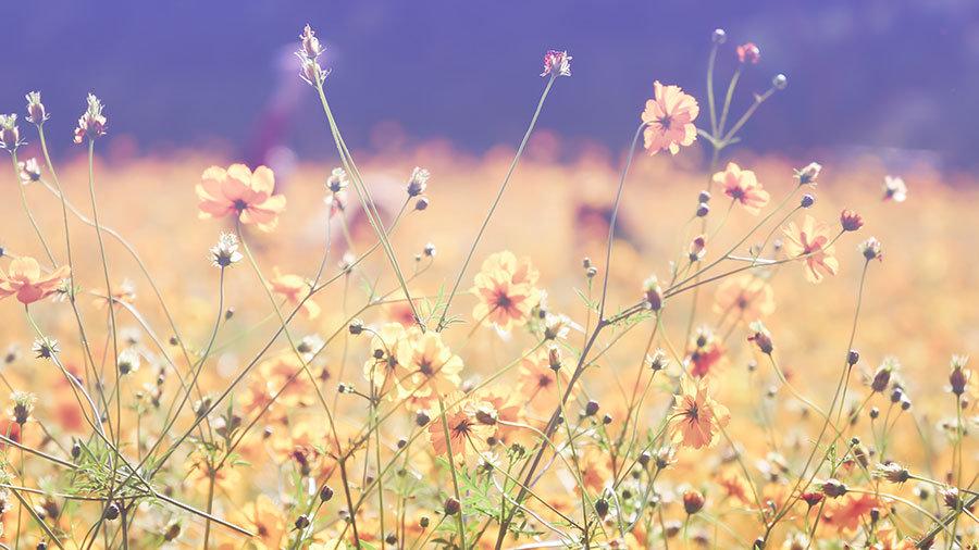 İlkbahar Manzara Duvar Kağıtları   3D Çiçek Duvar Kağıtları   Mardin