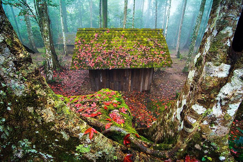 3 Boyutlu Orman İçi Duvar Kağıtları | Orman Evi Manzara Duvar Kağıtları