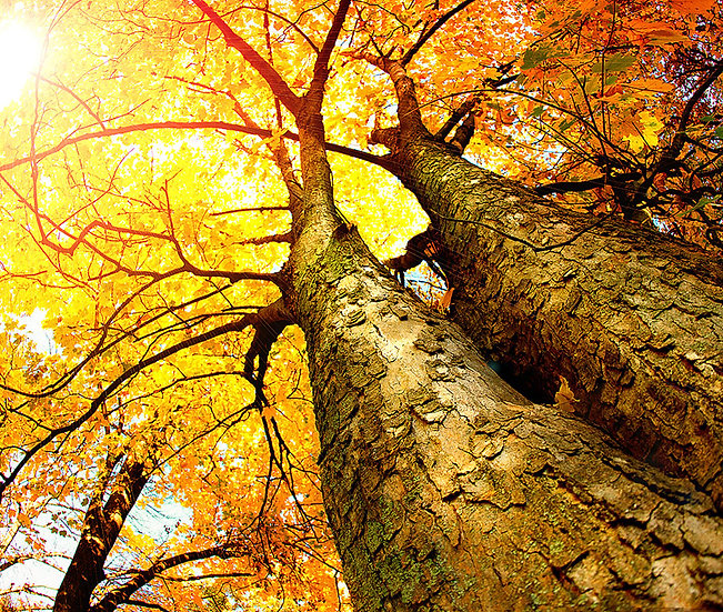 Manzara 3d Duvar Kağıtları | Ağaç Yaprak Manzara Duvar Kağıtları | İskenderun