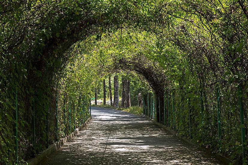 Botanik Bahçesi Duvar Kağıtları   3 Boyutlu Yeşil Tünel Duvar Kağıtları