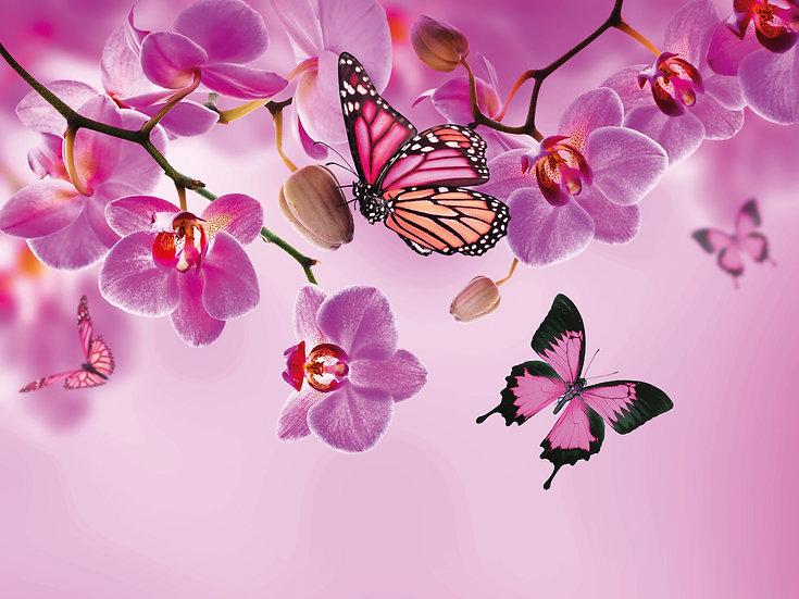 Kelebek Bahçesi Duvar Kağıtları | Gerçek 3 Boyutlu Duvar Kağıtları | Bursa
