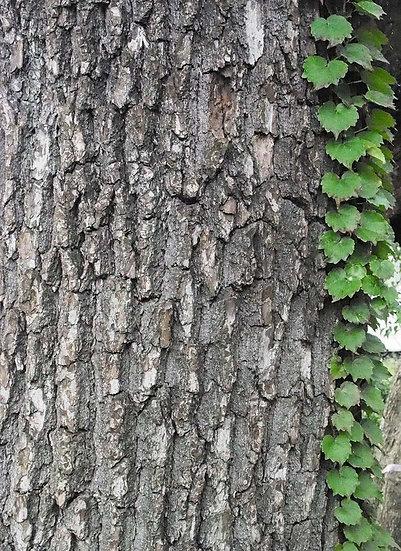 Sarmaşıklı Ağaç Duvar Kağıdı Kaplama | 3 Boyutlu Duvar Kağıtları | Ankara
