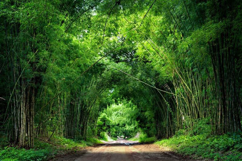 3d Resimli Duvar Kağıtları | Ev Dekorasyonu Orman Duvar Kağıtları | Mersin