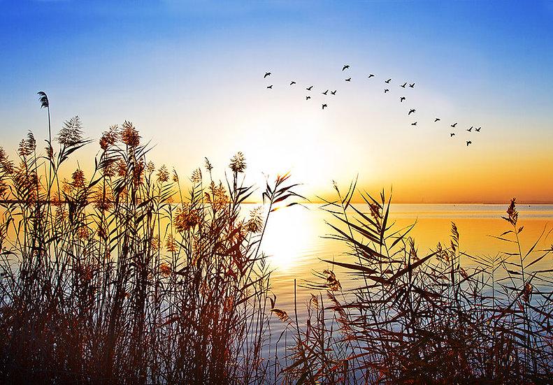 Kabartmalı Gün Batımı Kuş Duvar Kağıtları | 3 Boyutlu Duvar Kağıtları Ankara