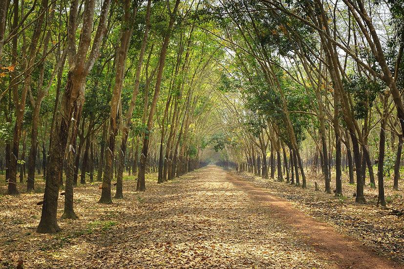 Orman Toprak Yol Duvar Kağıtları | 3 Boyutlu Tarla Manzara Duvar Kağıdı