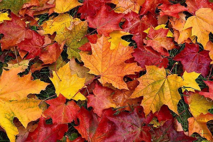 Sonbahar Yaprakları Duvar Kağıtları Hd | Oturma Odası Duvar Kağıtları | Malatya
