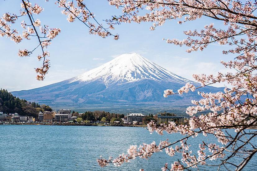 Fuji Dağı Gölü Japon Kirazı Duvar Kağıtları   3 Boyutlu Japonya Duvar Kağıdı